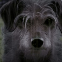 John Wick másképp - Most a kutyus áll bosszút