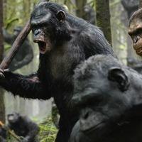 Brutális háború a Majmok bolygóján
