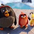 Mérges madarak uralják a világot