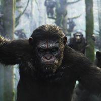 Újra támadnak a mutáns majmok