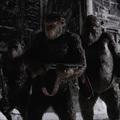Skinhead Woody Harrelsonnal csapnak össze a majmok