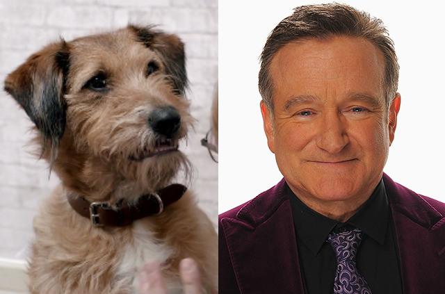 robin-williams-dennis-the-dog-absolutely-anything.jpg