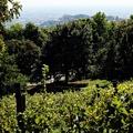 Szőlőtőkék őrzik Jókai Mór egykori kertjének emlékét Budán