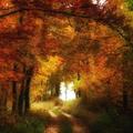 13 lenyűgöző fénykép a hazai őszi erdőkből