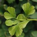 4 vágyfokozó növény, ami felpezsdíti a szexuális életed