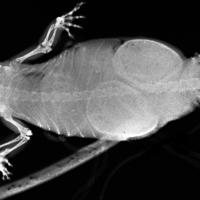 Szuperszkennert és röntgengépet a csendes-óceáni köderdőbe