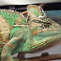 ZónáZoo – állatkert a múzeumi oktatóteremben