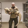 VOUS: Magyar mamuttal és jégkorszaki őslovakkal szemeztem a múzeum alagsorában