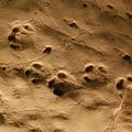 """Miocén lábnyomok Magyarországon – az ipolytarnóci orrszarvú és a gyöngyössolymosi """"medve"""" lábnyomai"""