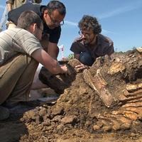 Rézkori erőd mellől került elő az új magyar mamut (INDEX videó)