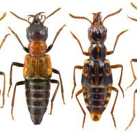 Eltűnhetnek a nem veszélyeztetett rovarfajok is?