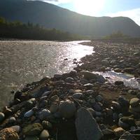 Kaukázusi pataklakók