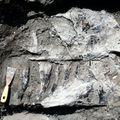 Új dinoszauruszfajt találtak a Bakonyban