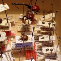 Tíz tudományra új faj holotípusával gyarapodtunk 2013 első hetében!