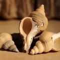 Több rekesz ammonitesz, pörgekarú és egyéb ősmaradvány érkezett az Őslénytárba