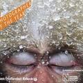 Hallottál már arról, hogy a japán makákók úgy fürdőznek, mint az emberek?