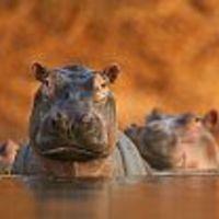 A világ legizgalmasabb természetfotói ismét a Magyar Természettudományi Múzeumban