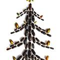 Karácsony, bogarakkal