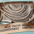 80 év után kerültek elő az Árpád-házi herceg szétkaszabolt csontjai