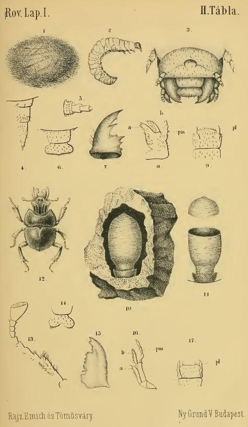 1884_csajko_abra.JPG
