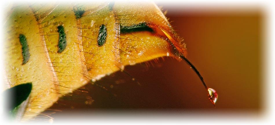 wasps-sting.jpg