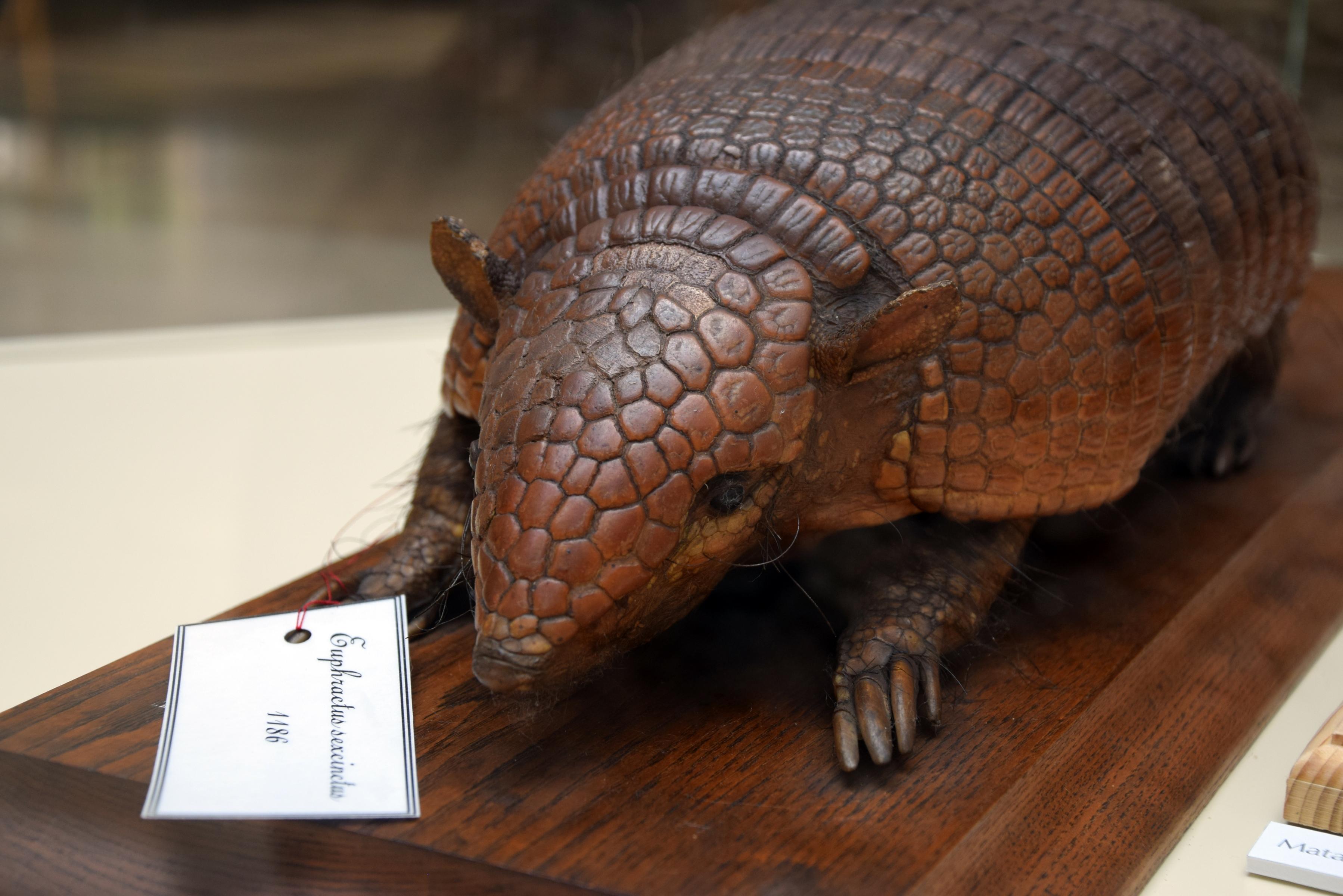 glyptodon_2016kupola_kovacseszter.jpg
