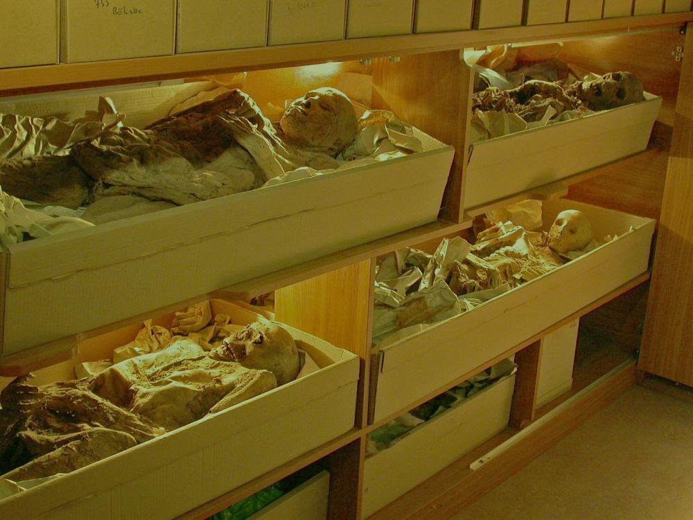 MTM Embertani tár Múmiagyűjtemény