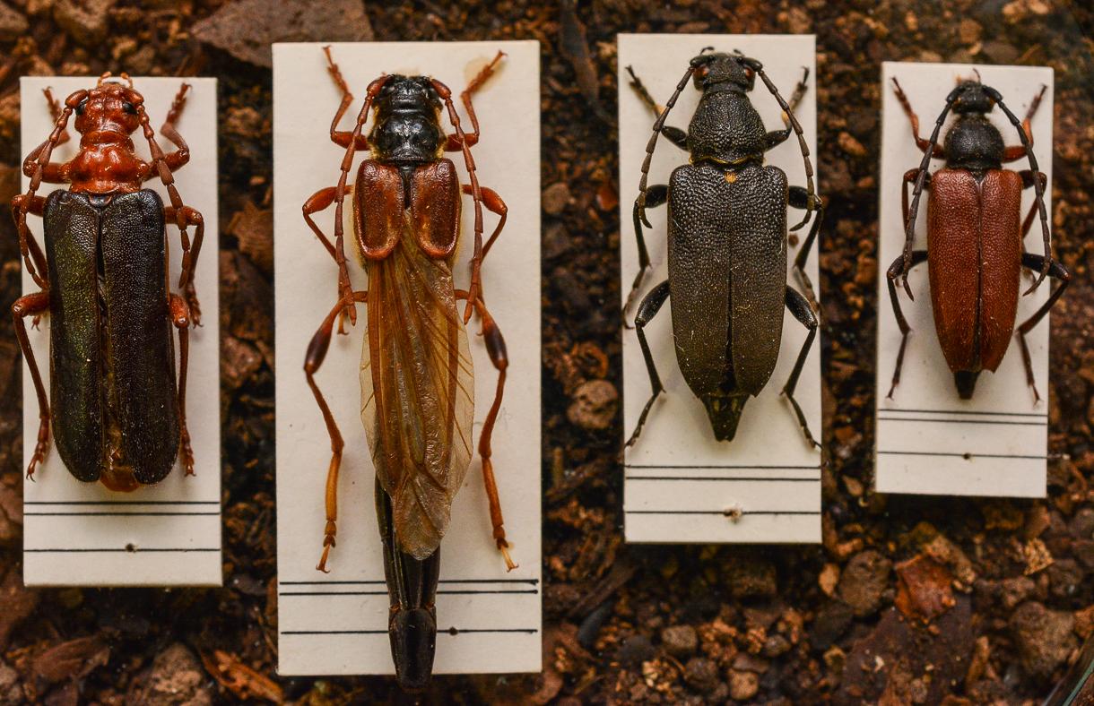 Egy kiállítás rovaros lenyomata – 60 éves az MTM Mátra Múzeuma