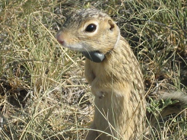 13lgsquirrel.jpg