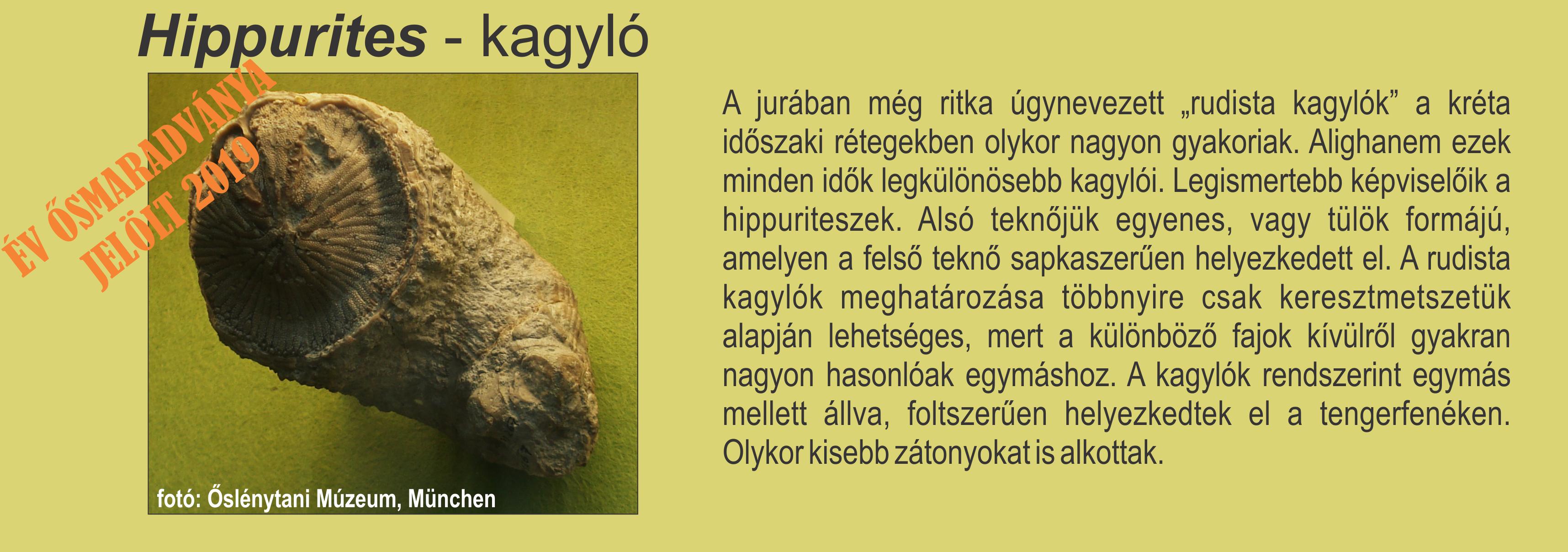 hippurites_kepesszoveg_egymasmellett.png