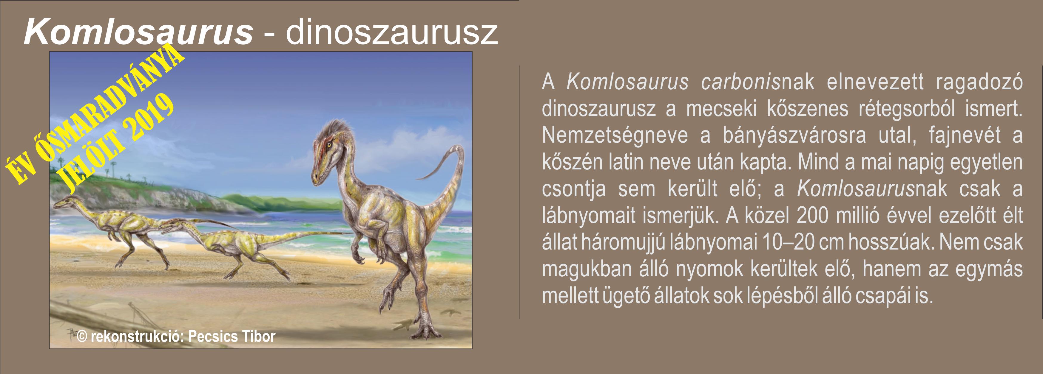 komlos_kepesszoveg_egymasmellett.png