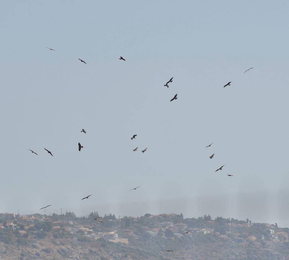 Izrael: a madárvonulás csomópontja