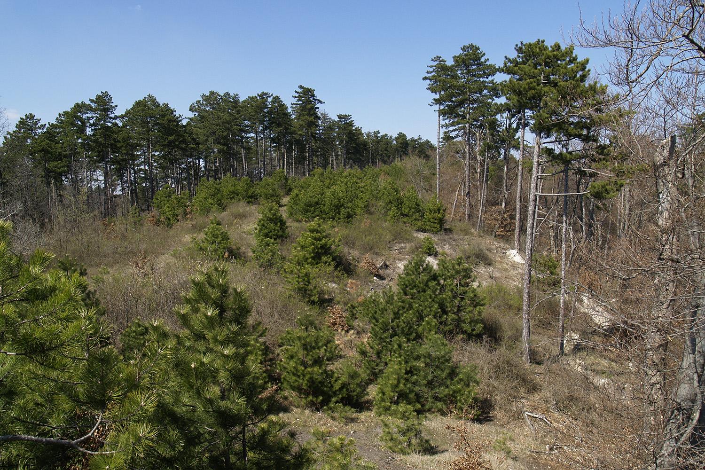 Trianon100 – Az elvesztett erdők pótlása