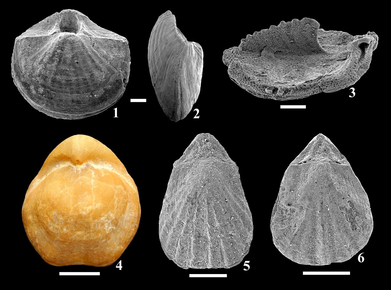 8_abra-brachiopoda-tipusok_blogra.jpg
