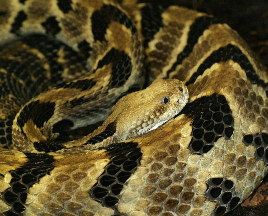 Kórokozók az emberen innen és túl: a kígyóölő gomba