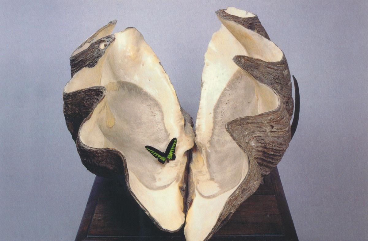 Óriáskagyló Jókaitól