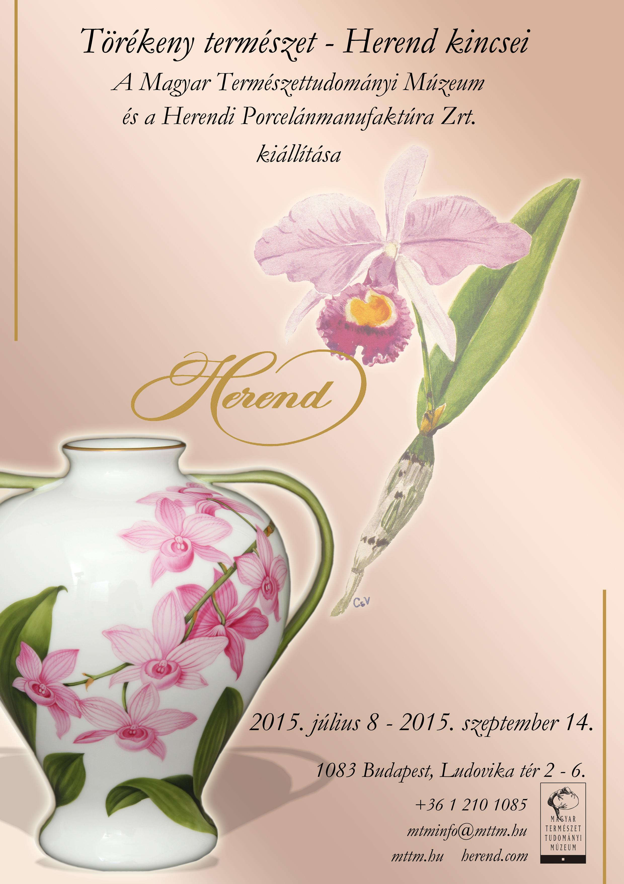 orchideakicsi.jpg
