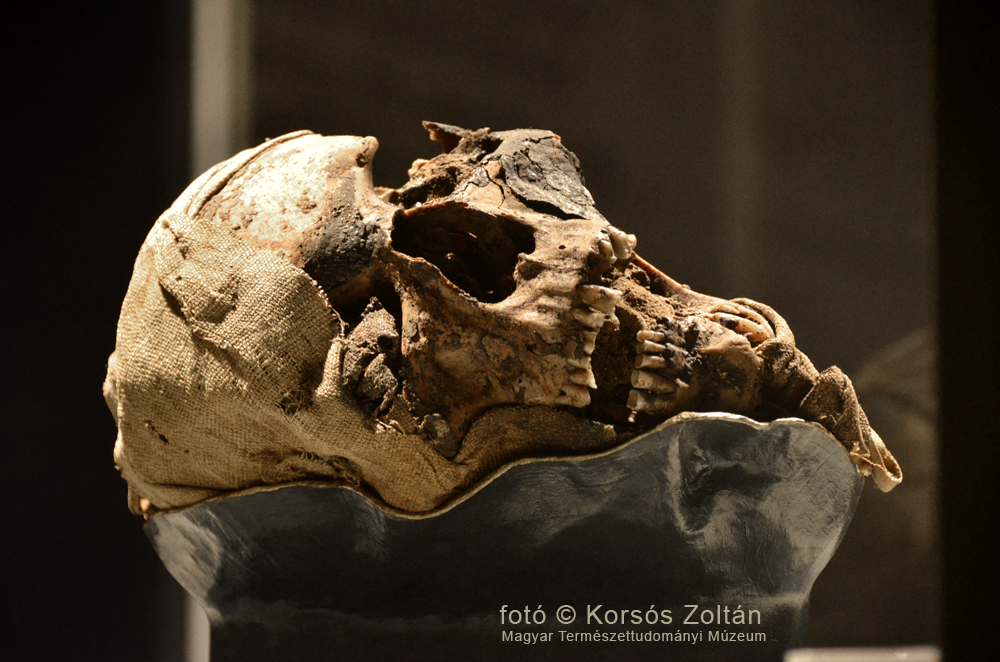 MTI: Európa-szerte bemutatják a váci múmiákat