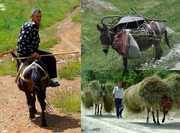 oszverek_albania2014_angyald.png