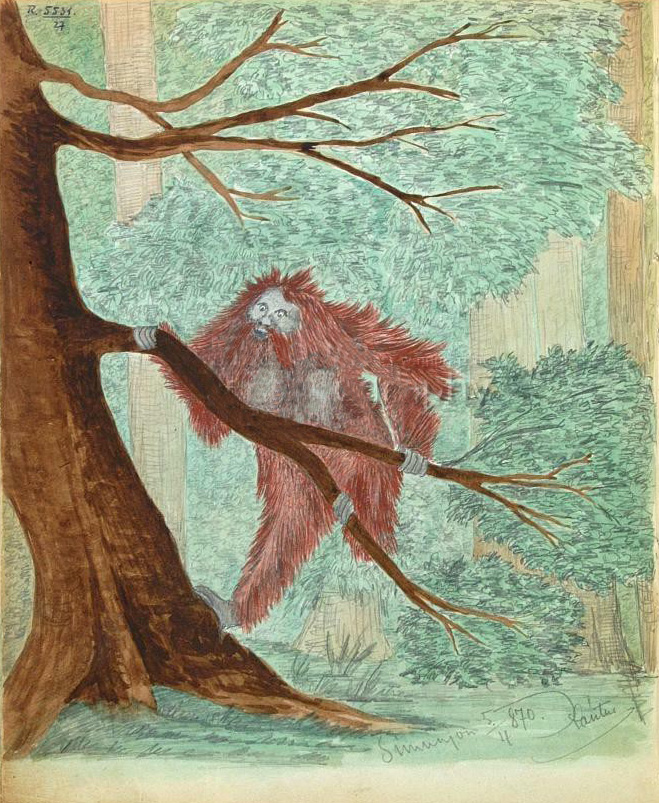 28-5_orangutan.jpg