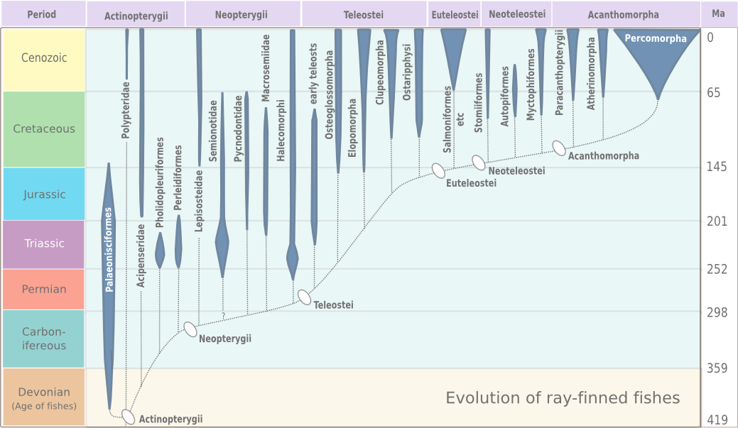 evolution_of_ray-finned_fish.png