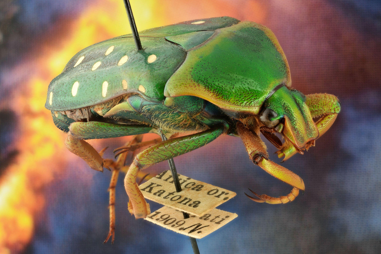 Malária, leharapott ujj és rovarok – Kittenberger Kálmán afrikai gyűjtései