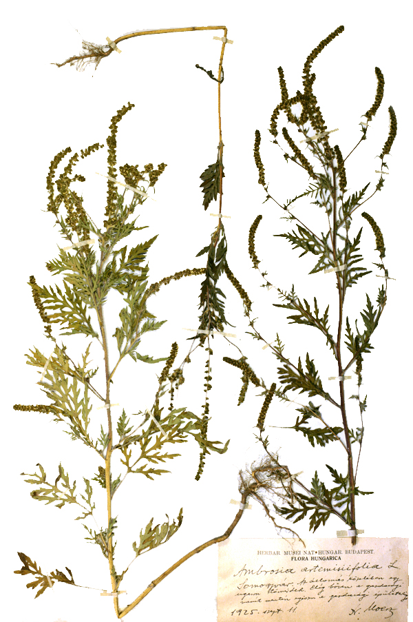 herbariumi_lap2web.jpg