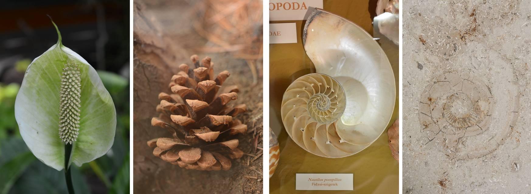 Matematika a Mátra Múzeum természetrajzi kiállításában