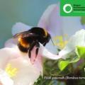Haladék a méheknek, a gazdáknak és az európai régióknak