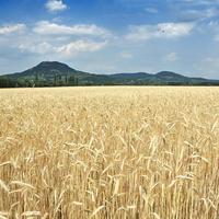 Pacsuta Péter: Mitől termő a föld, mitől mező a gazdaság? Fenntartható mezőgazdaság VS nagyipari agrobiznisz