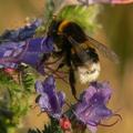 Zümm: így segítheted a méhes európai polgári kezdeményezést