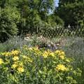 Napfordulós trendforduló a kertekben, a mezőkön