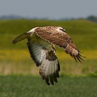 Ne lehessen veszélyeztetett fajokra vadászni! - Tiltakozzatok ti is!