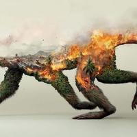 A lajhár és a tűz